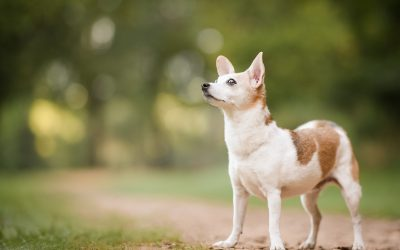 Learn Why A Sunrise Session Might Be Perfect for Your Dog