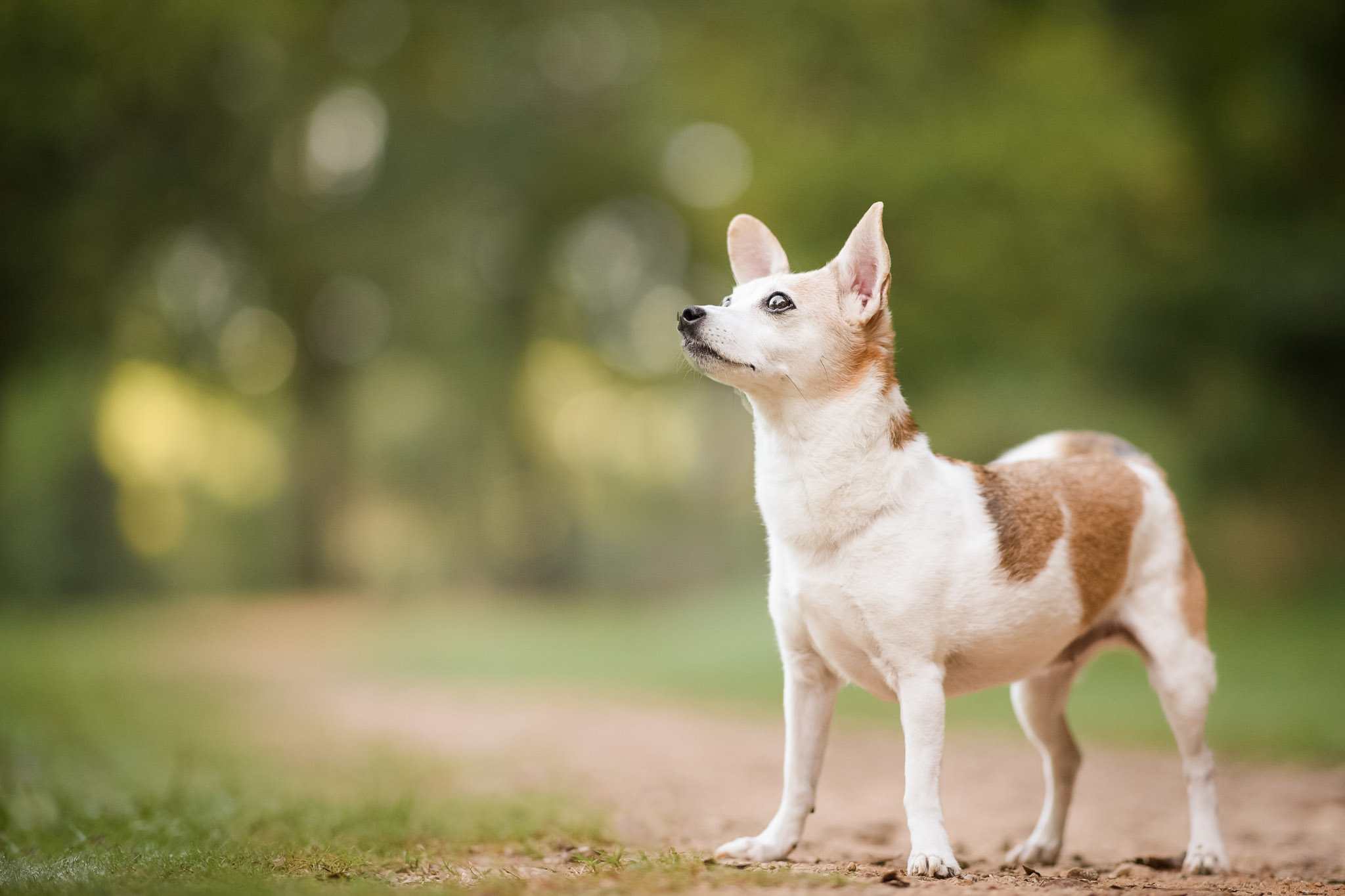 Learn why a sunrise session might be perfect for your dog with Atlanta pet photographer CM Bryson
