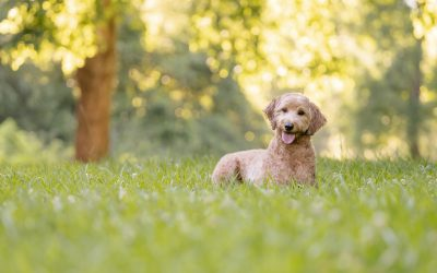 Favorite Parks for Dog Photography from Atlanta to Athens, GA