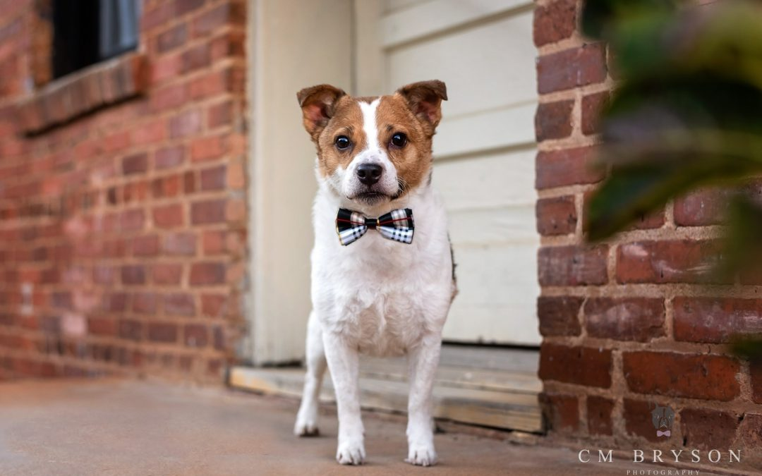The Best Dog Collars for Pet Photography