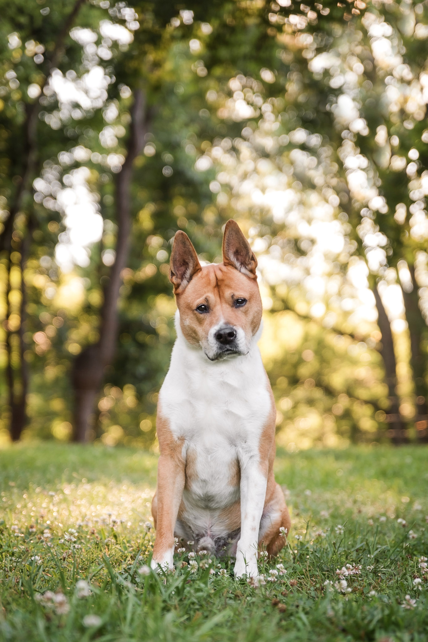 Favorite parks for dog photography from Atlanta to Athens Georgia by professional pet photographer Courtney Bryson.