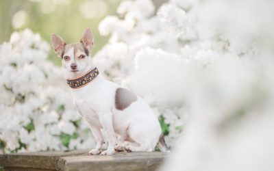 Dog Friendly Roswell, Georgia – Pet Photographer Finds Blooms in the City