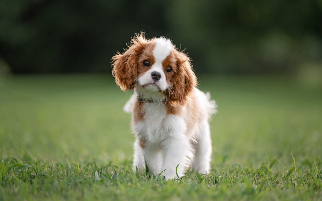 Choosing the Best Location for Pet Photography – A 3 Step Process