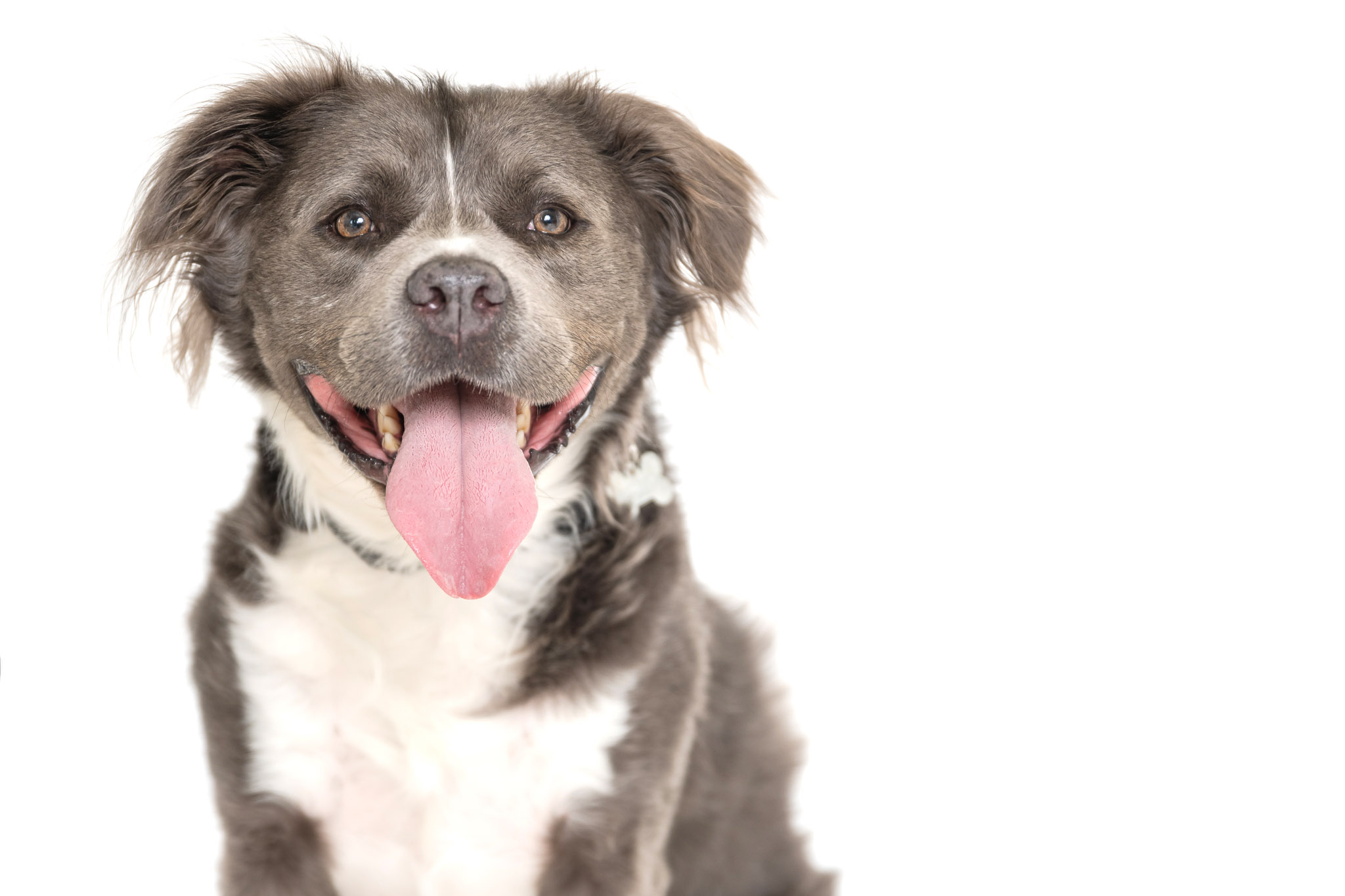 Some dogs have extra sensitivities but keeping preparation, environment, and safety in mind can help reactive dogs have successful pet photography sessions with Atlanta pet photographer CM Bryson.