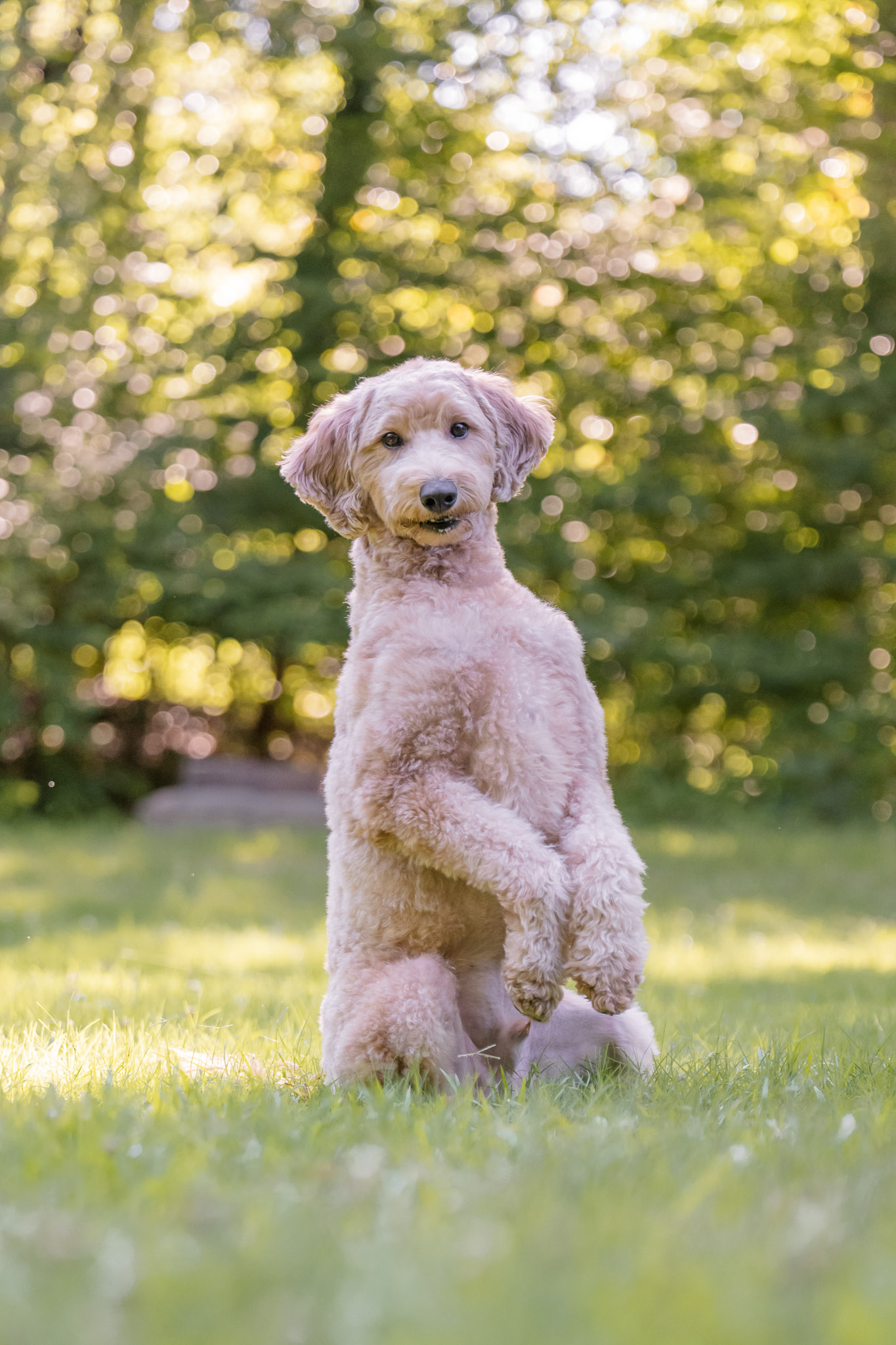 Preparation for your reactive dog's professional photos is key to setting them up for success according to Atlanta pet photographer.